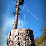 spúštanie častí stromu